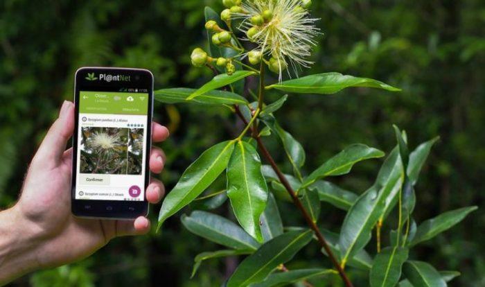 Las 5 mejores apps para identificar plantas para iPhone